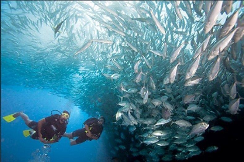 Curso de buceo Padi advanced Open Water Diver Madrid Divers